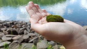 Moss in hand Royalty Free Stock Photo