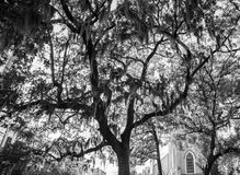 Moss of Savannah. Moss hanging on the trees next to church in old Savannah Georgia Royalty Free Stock Photos