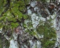 The moss that has tenacious vitality stock photos