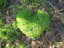 Moss heart Stock Images