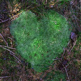 Moss heart Stock Image