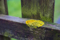 Moss on a hedge Stock Images