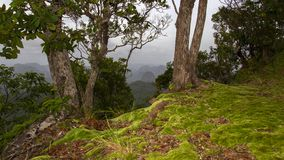 Moss on Hill. Royalty Free Stock Photo