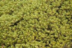 Moss in the Himalayas stock photos