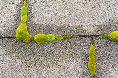 Moss on House Roof Stock Photo
