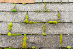 Moss on House Roof stock photography