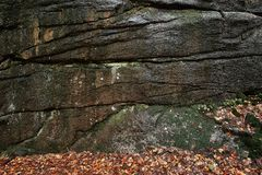 Moss on the huge rock stone texture. Moss background. Green moss on the stone wall with autumn leaves on the ground. Royalty Free Stock Photography