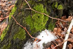Moss i skogen Arkivbilder