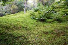 Moss i tempel Royaltyfri Foto