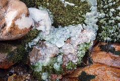 Moss and ice on the bank of a mountain stream in August Stock Images