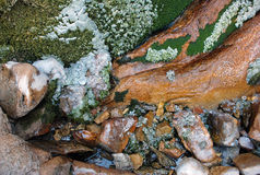 Moss and ice on the bank of a mountain stream in August Stock Photos