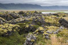 Moss in Iceland Royalty Free Stock Photo
