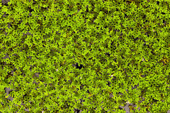 Moss In The Water Stock Images