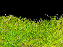 Moss isolated Royalty Free Stock Photo