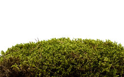 Moss isolated on white. Closeup Stock Photo