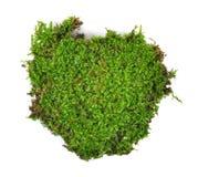 Moss isolated on white bakground Stock Photography