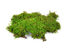 Moss isolated on white bakground Royalty Free Stock Image