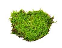 Moss isolated on white bakground Stock Photo