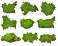 Moss isolated on white bakground Stock Photos