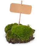Moss isolated on white Royalty Free Stock Photo