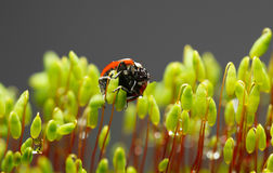 Moss and ladybug underside view after rain Stock Images
