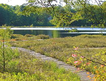 Moss Lake Nature preserve. Wooden walk way through a bog Royalty Free Stock Images