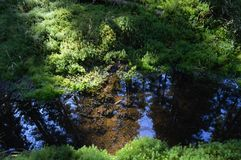 Moss Lake (vattenspegel) Arkivfoto