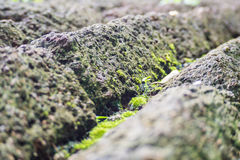 Moss on laterite Royalty Free Stock Photography