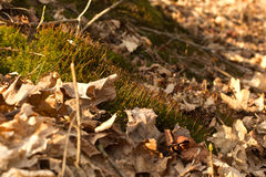 Moss in Lath Stock Photos