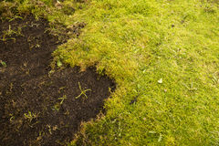 Moss in lawn Stock Images