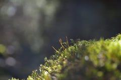 Moss, Leaf on Moss Stock Photo
