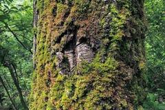 Moss, Leaf on Moss, Moss autumn, forest moss, moss seeds, Nature, Wildlife, Micro Stock Photo