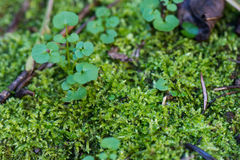 Moss and leaf Royalty Free Stock Image