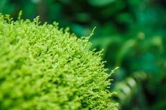 Moss leaf texture Stock Photos