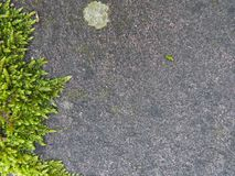 Moss leaves frame on stone Royalty Free Stock Photos