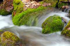 Moss and Leaves in a Mountain Stream Royalty Free Stock Images
