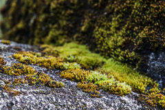 Moss and Lichen Closeup Royalty Free Stock Image