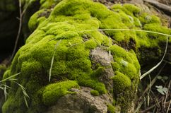 Moss and lichen covered stone Stock Photo