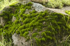 Moss and lichen covered stone Royalty Free Stock Photo