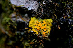 MOSS LICHEN FOG Royalty Free Stock Images
