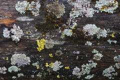 Moss and lichen. Stock Images