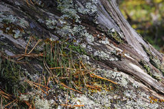 Moss and lichen. Stock Photo