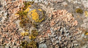 Moss and lichen Royalty Free Stock Image