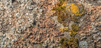 Moss and lichen Stock Photo