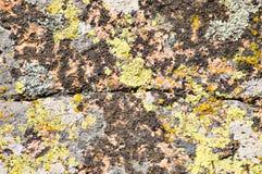 Moss and lichen on granite stone Stock Photo