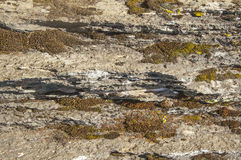 Moss and lichen on granite stone rock texture Stock Images