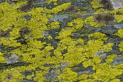 Moss and lichen on granite stone rock texture Royalty Free Stock Photo