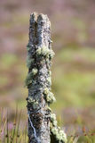 Moss and lichen growing on a fence post Stock Photos