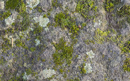 Moss and lichen growing on a rock Stock Photos