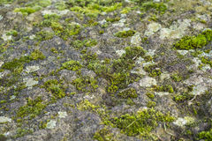 Moss and lichen growing on a rock Stock Image